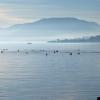 Photos du lac de Neuchâtel depuis Saint-Blaise